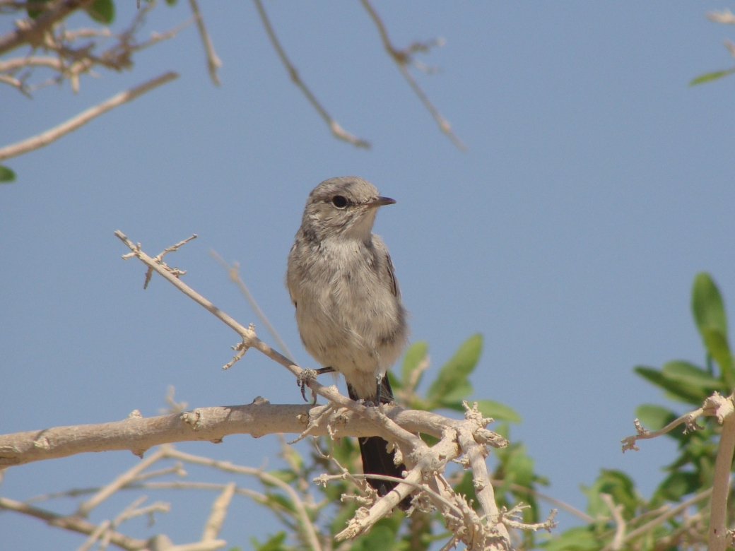 bird-in-bush-masada